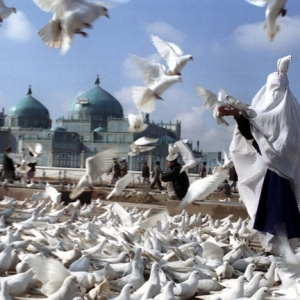 A woman in a white burqa feeds pigeons after paying respect to Imam Ali at his resting place in Mazar-e Sharif. The white burqa is widely used in that region. Photo by Farzana Wahidy