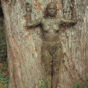 Tree of life 1976 by Anna Mendieta