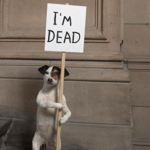 David Shrigley, I'm Dead, 2010