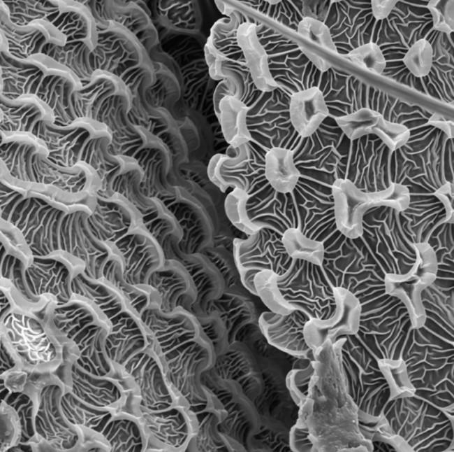 Contemporary Archaeology, The World Series Lazio Site, 1968 - Studies of Animal Life, Lazio Site. Bug III, 2013 Electron microphotograph