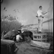 Artists James Perry Wilson (standing) and Fred Scherer working together on the Upper Nile diorama background painting, 1939. ©AMNH